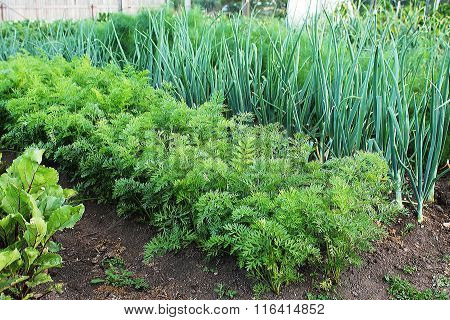 Garden With Vegetable Beds