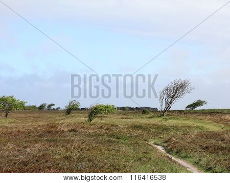 Heath Landscape On The Island Of Sylt