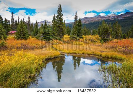 Snow-covered mountains and the turned yellow autumn grass around the Bow Lake .