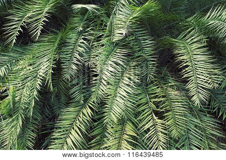 Green Tropical Thicket