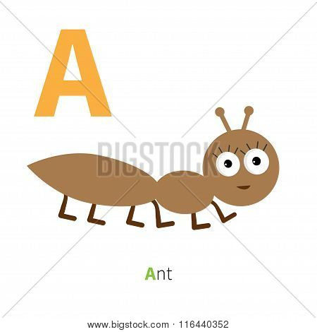 Letter A Ant Insect Zoo Alphabet. English Abc With Animals Education Cards For Kids Isolated White B