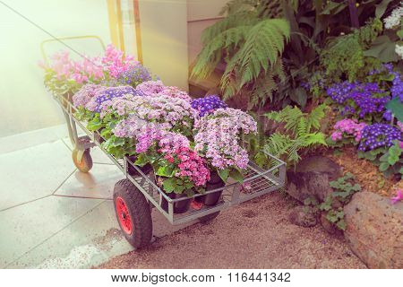 Trolley With Flowers In Greenhouse Entrance