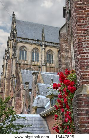 Twine Red Roses On The Facade Of The Grote Kerk (sint-bavokerk) In The  Historic Center Of Haarlem,