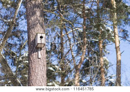 Nesting Box On Trunk Of The Tree In Winter Park