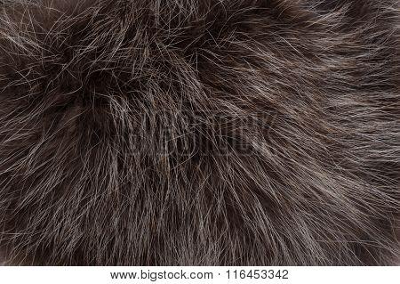 Background of raccoon fur