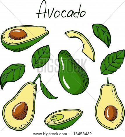 Avocado And Leafs In Sketch Style
