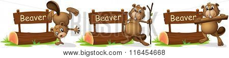 Beaver standing next to the sign illustration