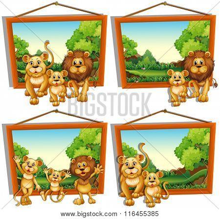 Four photo frames of lion family illustration