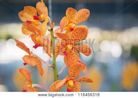 Beautiful orange orchids flower tree.