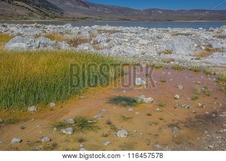 Colorful Grass At Mono Lake In California