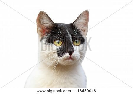 Portrait Of Cute Cat Over White