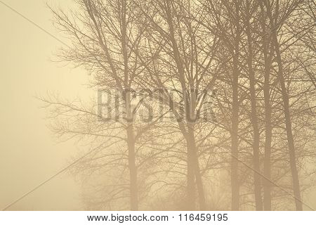 Spooky Forest In The Mist