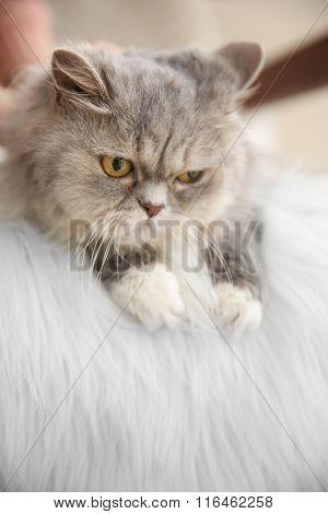 Grey cat in the room
