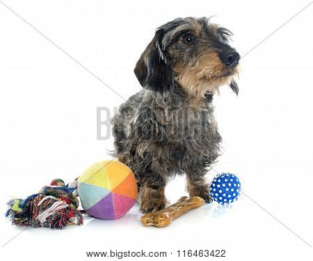 Wire Haired Dachshunds And Toys