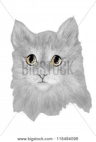 Cat Baby Cute