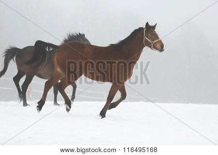 Two Horses In Fog