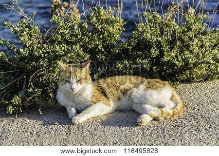 Cat Sunbathing Close To The Sea