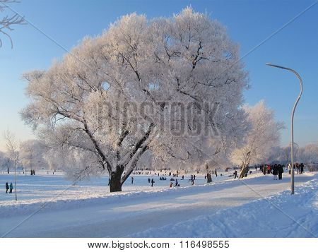 Day of hoarfrost in city park