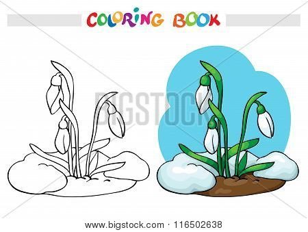 Coloring Book. Snow Melts. Grow The First Spring Flowers - Snowdrops.