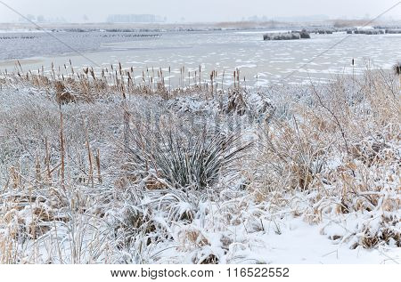Frozen Swamp In Winter