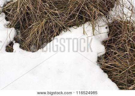 Faded Grass Under Snow.