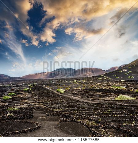 vineyards near volcanic mountains in Lanzarote