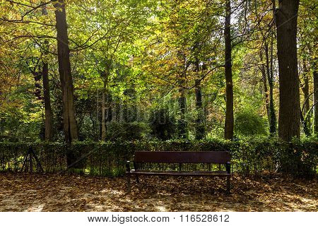 Forest Landscape With Trees And Bench In Retiro Park Of Madrid ,spain