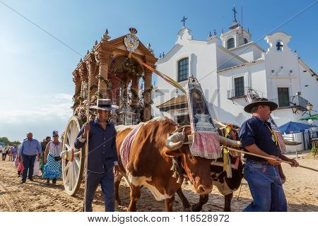 El ROCIO ANDALUCIA SPAIN - MAY 22, 2015: Romeria with the bulls after visiting the Sanctuary goes to village. It is one of the most famous pilgrimage of Spain. This pilgrimage passes from the 15th century.
