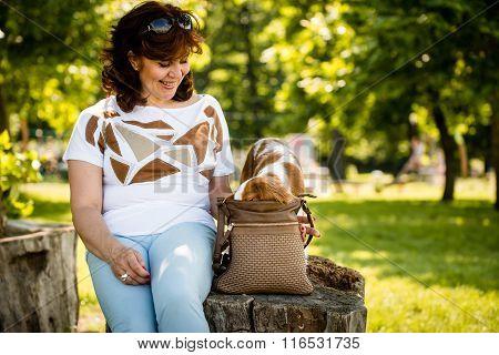 Dog with head in woman's  handbag