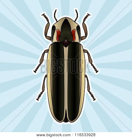 Insect anatomy. Sticker Firefly beetle Lampyridae. photinus pyralis. Sketch of Firefly beetle.  Fire