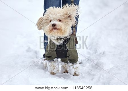 Jumping Dog In Snow Landscape