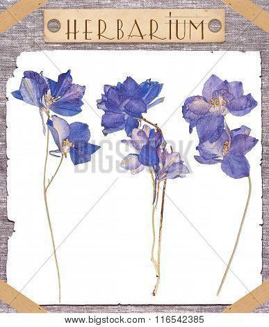 Herbarium Pressed Blue Flowers