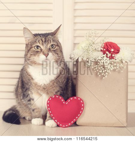 Valentines Day Cat