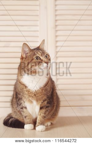 Cat Sitting On Wooden Background