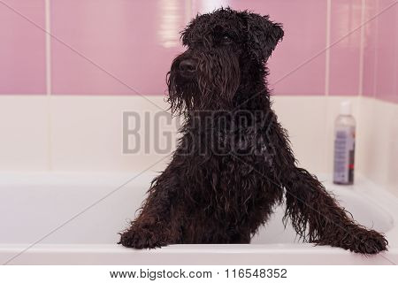 Small Black Dog Having A Bath In A Bathroom