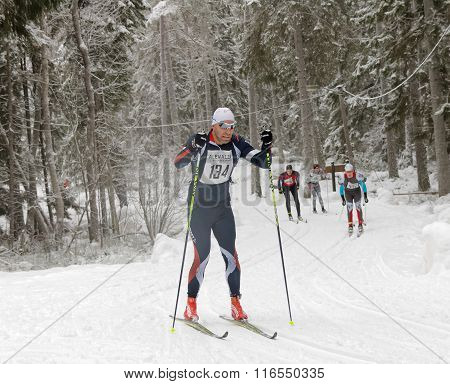 Focused Cross Country Skiing Man In The Beautiful Spruce Forest