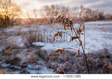 frozen twig on morning meadow