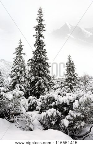 nice winter scene with snowy forest in mountains
