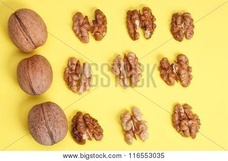 Group Of Halves Of Walnut