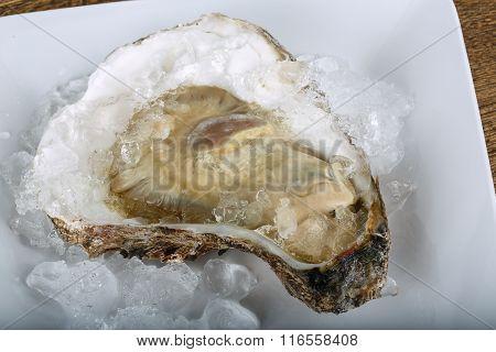 Fresh Raw Oyster