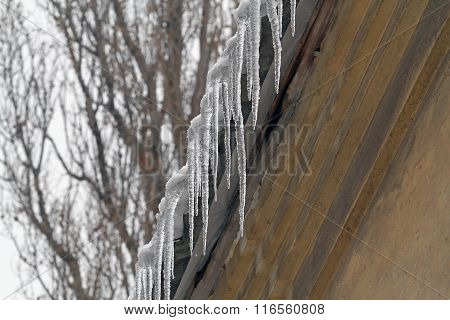 Icicles Hanging From The Roof. Go Under The House With Icicles Hanging Dangerously. You Can Get Inju