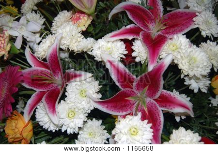 Stargazers And Mums