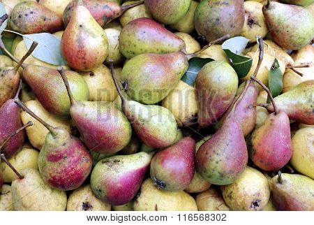 Backgrounds Of Ripe Juicy Yellow Pears