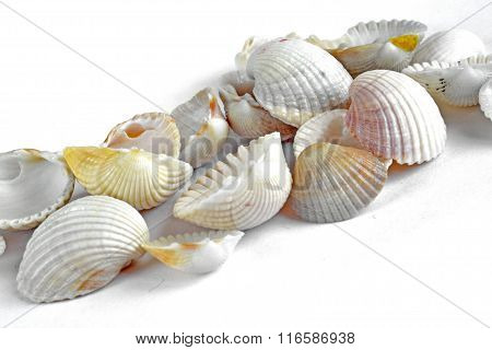 Sea Shells On White