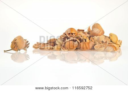 Hazel walnut shell