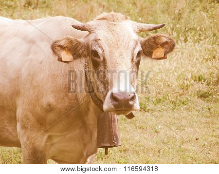 Retro Looking Cow Picture