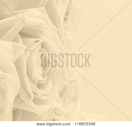 Beautiful White Roses As Wedding Background. Soft Focus. In Sepia Toned. Retro Style