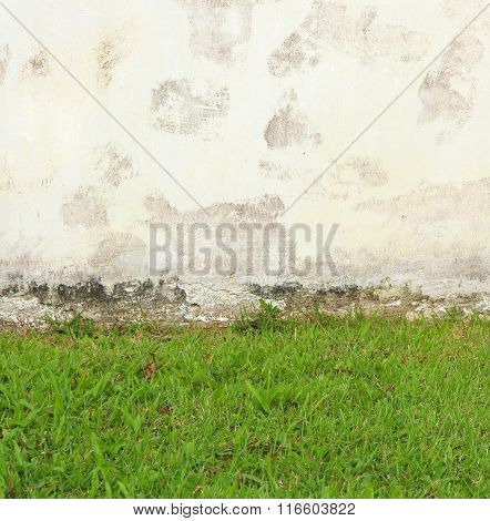 Grass with the Wall