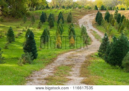 Christmas Tree Road