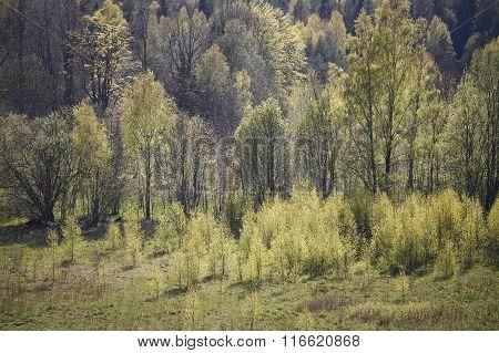 A forest landscape